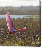 Rosy Soar Canvas Print
