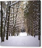 Roth Park Trail 2 Canvas Print