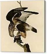 Rough-legged Falcon Canvas Print