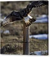 Rough-legged Hawk   #1865 Canvas Print