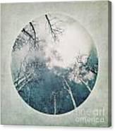 round treetops III Canvas Print