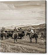 Rounding Up Cattle In Cornville Arizona Sepia Canvas Print