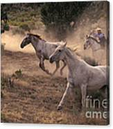 Rounding Up Horses On The Ranch Canvas Print