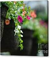 Row Of Hanging Baskets Shallow Dof Canvas Print