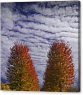Rows Of Red Autumn Trees With Cirus Clouds Canvas Print