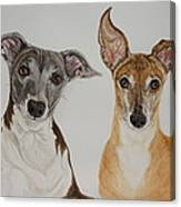 Roxie And Bruno The Greyhounds Canvas Print