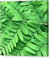 Royal Fern  Frond Detail Canvas Print