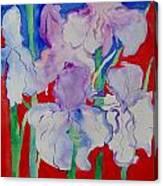 Royal Iris Canvas Print