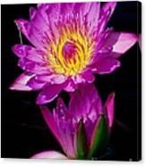 Royal Lily Canvas Print