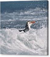 Royal Penguin Swimming In Surf Canvas Print