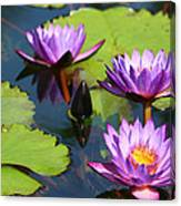 Royal Purple Water Lilies Canvas Print