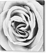 Rubellite Rose Bw Palm Springs Canvas Print