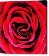 Rubellite Rose Palm Springs Canvas Print