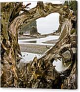 Ruby Beach Driftwood #3 Canvas Print