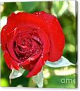 Ruby Rose Diamond Dust Canvas Print