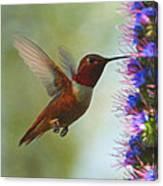 Ruby Throated Hummingbird Digital Art Canvas Print