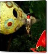 Ruby- Throated Hummingbird Canvas Print