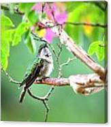 Ruby-throated Hummingbnird - 6763-002 Canvas Print