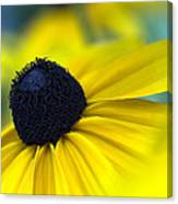 Rudbeckia Coneflower Canvas Print