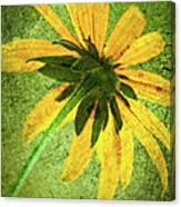 Rudbeckia On Cement Canvas Print