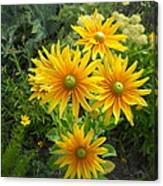 Rudbeckias With Green Centers Canvas Print
