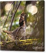 Ruffed Grouse Side Pose Canvas Print