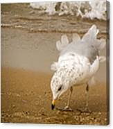 Ruffled Feathers Canvas Print
