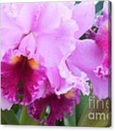 Ruffled Orchids Canvas Print