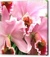 Ruffles And Flourishes Cattleya Orchids Canvas Print