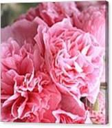 Ruffly Pink Hollyhock Canvas Print