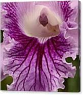 Ruffly Purple Orchid Closeup Canvas Print