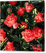 Ruffly Red Tulips Square Canvas Print
