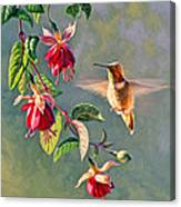Rufous And Fuschia Canvas Print