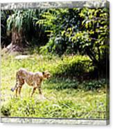 Run Cheetah Run 0 To 60 In 3 Seconds Canvas Print