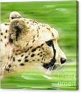 Run Cheetah Run Canvas Print