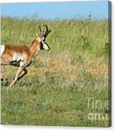 Run  Light Buck  Run Canvas Print