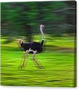 Run Ostrich Canvas Print
