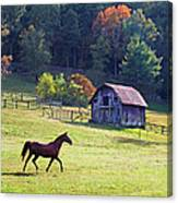Running Horse And Old Barn Canvas Print