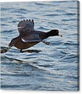 Running On Water Series 5 Canvas Print