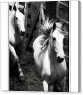 Running White Canvas Print