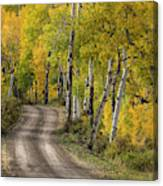 Rural Forest Service Road Canvas Print
