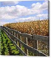 Rural Landscape With Fence Canvas Print