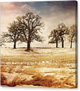 Rural Oaks Canvas Print