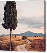 Rural Road With Cypress Tree In Tuscany Italy Canvas Print