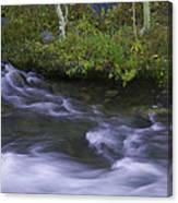 Rushing Stream And Creek Bank - Eastern Sierra Canvas Print