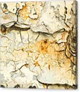 Rust And Peeling Paint Canvas Print