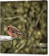 Rustic Cardinal Canvas Print