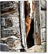 Rustic Horse Scene Canvas Print