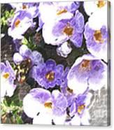 Rustic Planter Box Canvas Print