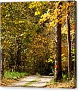 Rustic Road Canvas Print